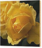 New Yellow Rose Wood Print
