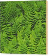 New York Ferns Wood Print