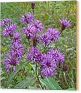 New York Ironweed Wildflower - Vernonia Noveboracensis Wood Print