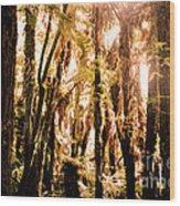 New Zealand Bush Wood Print