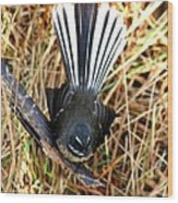 New Zealand Fantail Wood Print