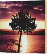 New Zealand Flower Sunset Wood Print