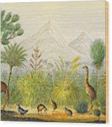 New Zealand Kiwi, Takahe, Extinct Moa Wood Print