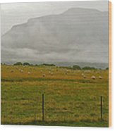 New Zealand Sheep Farm Wood Print