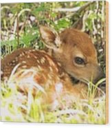 Newborn Fawn Wood Print