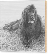 Newfoundland Dog Pencil Portrait Wood Print
