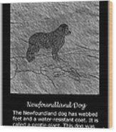 Newfoundland Dog Vintage Sketch Wood Print