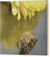 Newly Emerged Honey Bee Wood Print