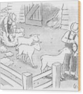 Newly-shorn Sheep Walk Out Of A Barn Wood Print