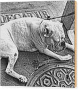 Newsworthy Dog In French Quarter Black And White Wood Print