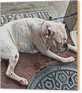 Newsworthy Dog In French Quarter Wood Print