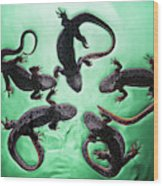 Newts  Pleurodelinae  On The Surface Wood Print