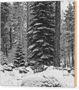 Next Season Christmas Trees Wood Print
