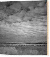 nfrared picture of the nature area Dwingelderveld in Netherlands Wood Print by Ronald Jansen