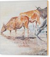 Nguni Cattle Wood Print by David  Hawkins