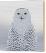 Nh Seacoast Snowy Owl  Wood Print