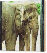 Niabi Asian Elephants Wood Print