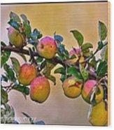 Nice Apples  Wood Print