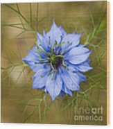 Nigella Damascena Wood Print