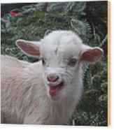Nigerian Baby Goat 3 Of 8 Wood Print