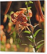 Night Bloom II Wood Print