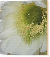 Night Blooming Cereus Cactus Wood Print