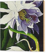 Night Blooming Cereus Wood Print