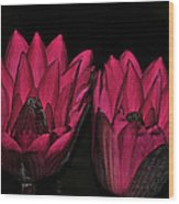 Night Blooming Lily 2 Of 2 Wood Print