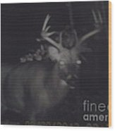 Night Buck Wood Print