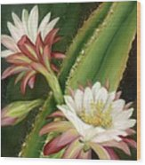 Night Cereus Wood Print by Summer Celeste