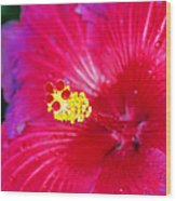 Night Fire Hibiscus Wood Print