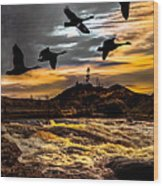 Night Flight Wood Print by Bob Orsillo