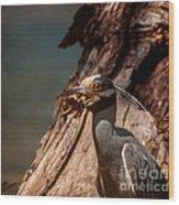 Night Heron And Crawdaddy Wood Print