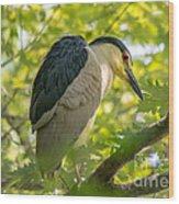 Night Heron At Rest Wood Print