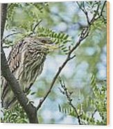 Night Heron Pictures 10 Wood Print