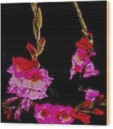 Night Miracle-sword Lily Wood Print