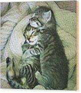 Night Night Kitties Wood Print