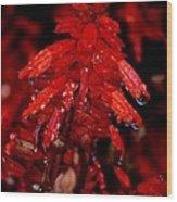 Night Of Glistening Red Salvia Wood Print