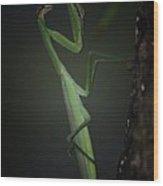 Night Of The Praying Mantis Wood Print