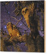 Night Owls Wood Print
