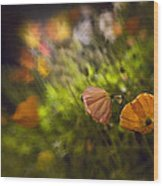 Night Poppies Wood Print