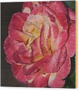 Night Rose Wood Print