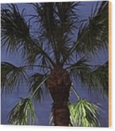 Night Sky Through The Palm Wood Print
