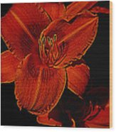 Night Time Lilly Wood Print