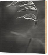 Nike Of Samothrace Wood Print