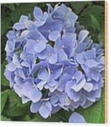 Nikko Blue Hydrangea Wood Print