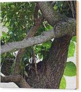 Nispero Tree Wood Print