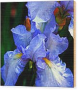Nita's Iris Wood Print