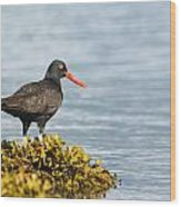 No Bird Is An Island Wood Print