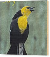 Yellow-headed Blackbird Singing Wood Print